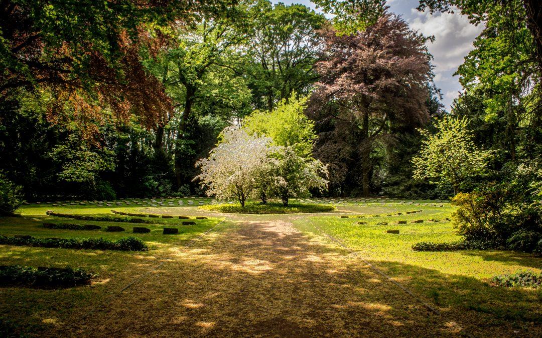 Bevar træerne og gør haven så smuk og naturlig som du kan